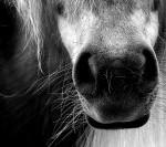 Homöopathie in der Pferdemedizin, Dr. Ina Luz aus München