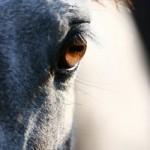 Pferd ECF photocase
