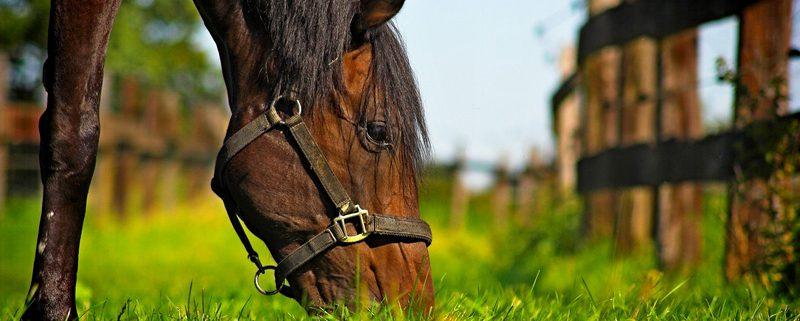 Pferd Fütterung Dr. Ina Luz aus München